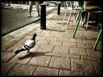 Een lamgezopen duif strompelt loom terug naar huis. 'Morgen is er een nieuwe nacht.'